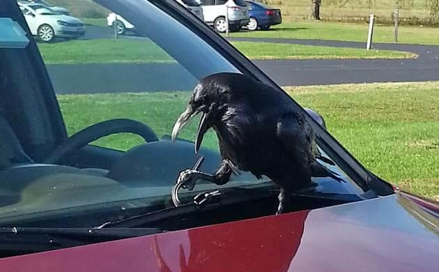Raven Stop