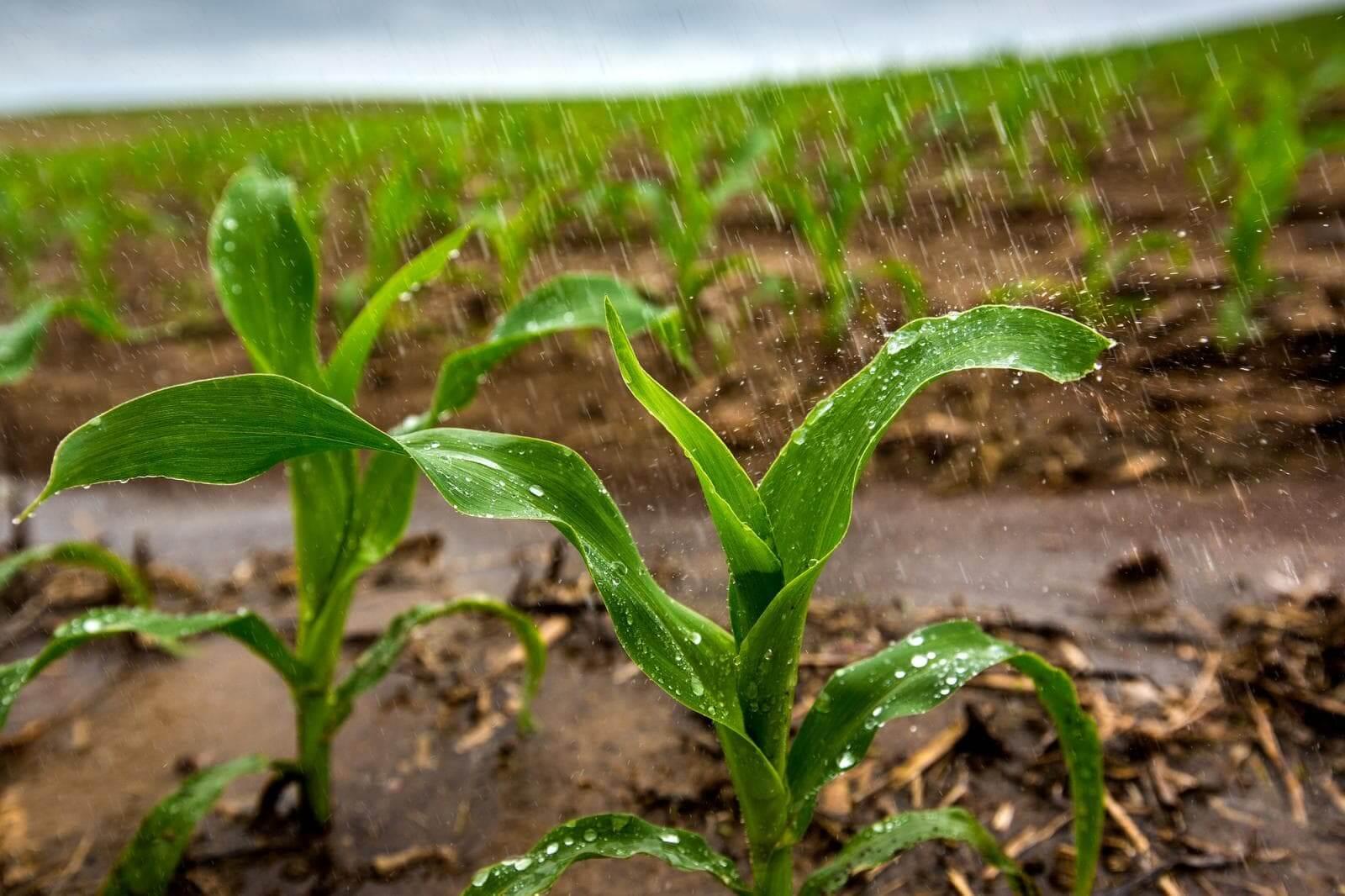 Plant Breeding Certificates